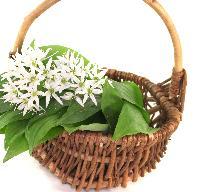 Jadalne chwasty - które dzikie zioła można wykorzystywać w kuchni?