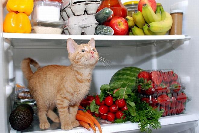 Jak przechowywać warzywa, żeby jak najdłużej zachowały świeżość?